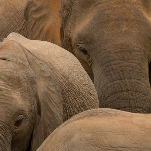 Elephant Hour Soundscape