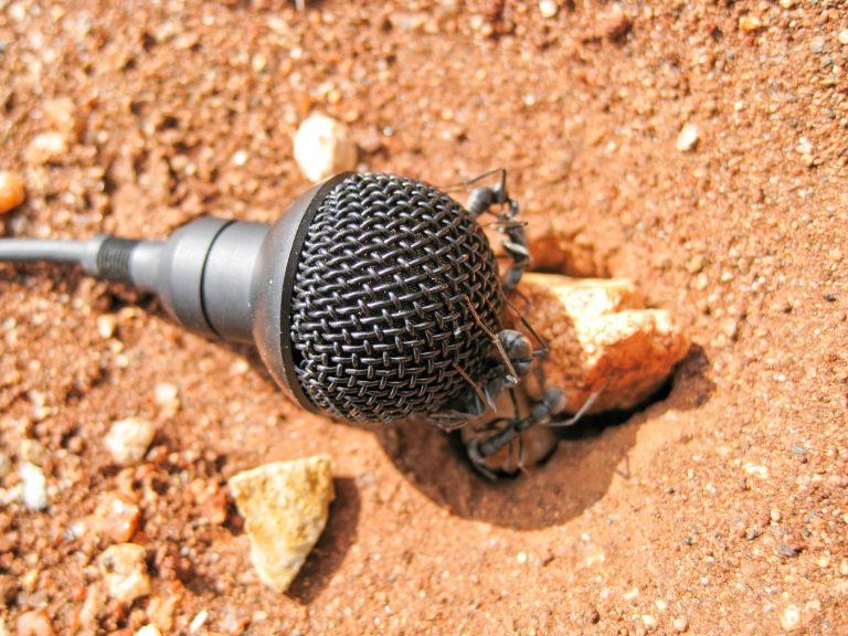 Singing Ants - Recorded Ant Sounds by Derek Solomon